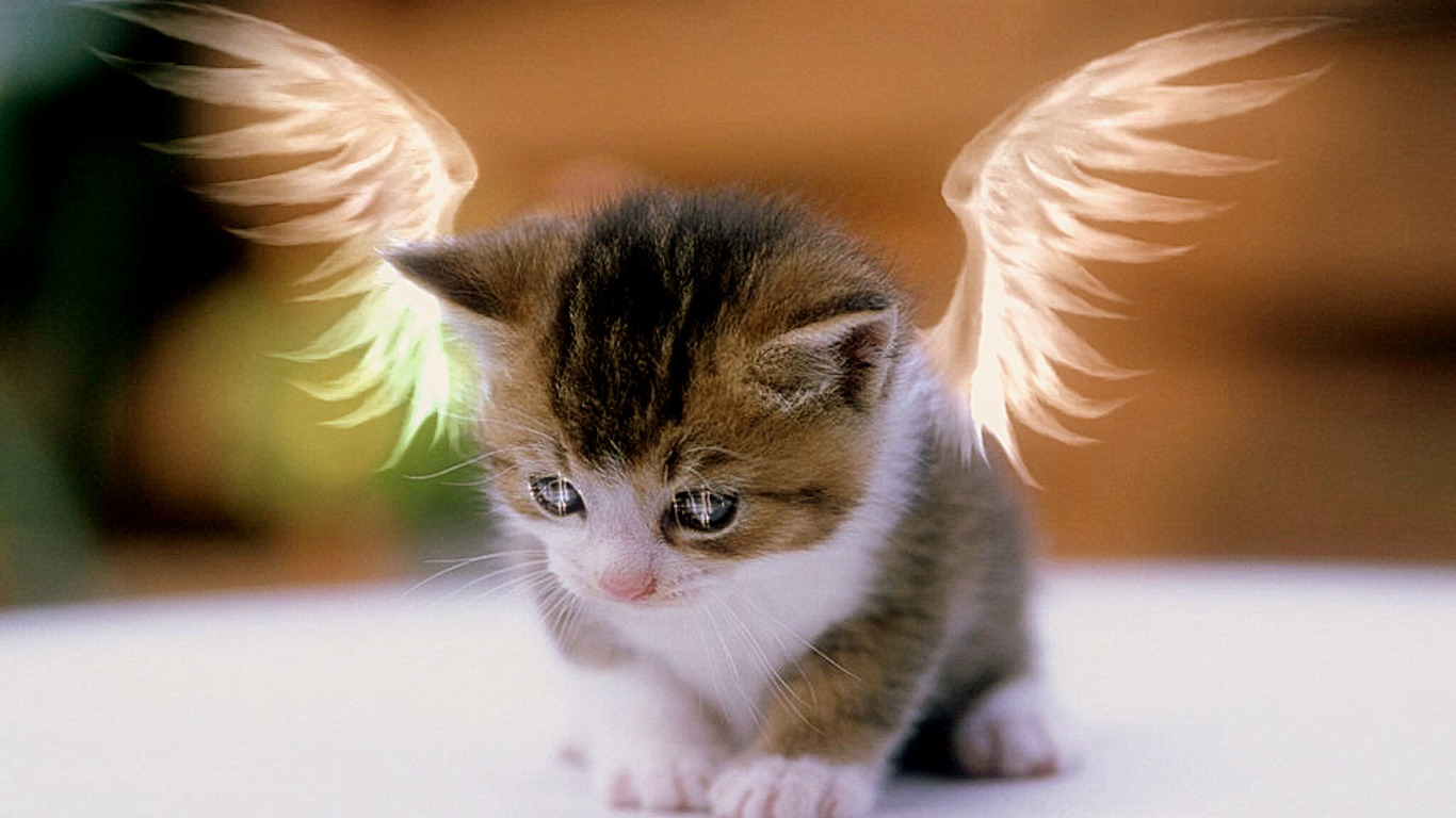 30 cute and lovely cat wallpapers for desktop - Baby kitten backgrounds ...