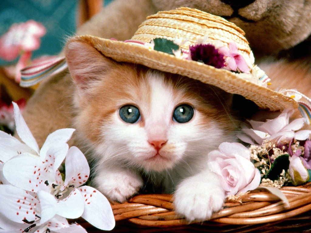 Lovely Cat Gallery Cute Cat Wallpaper