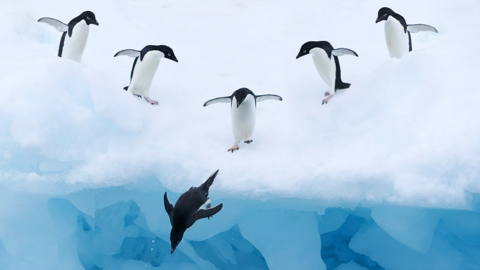 Penguins-Ice-Snow-Water