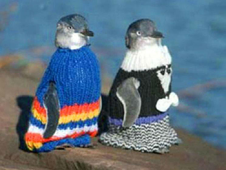 Penguins Wear Sweaters