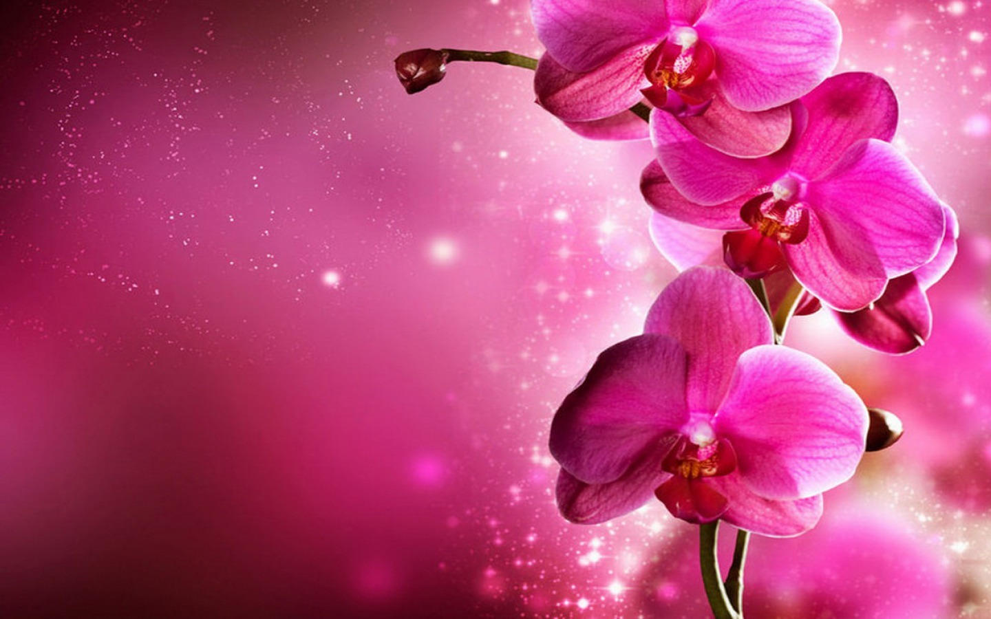 Pink-Abstract-Designs-Wallpapers-5