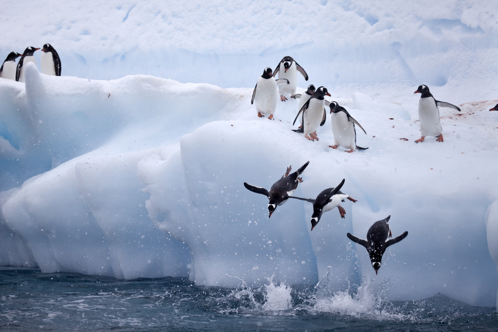Three penguin Jumps
