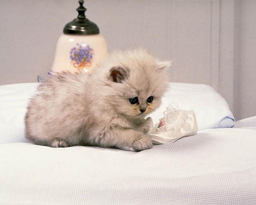 White-Cat-Plying