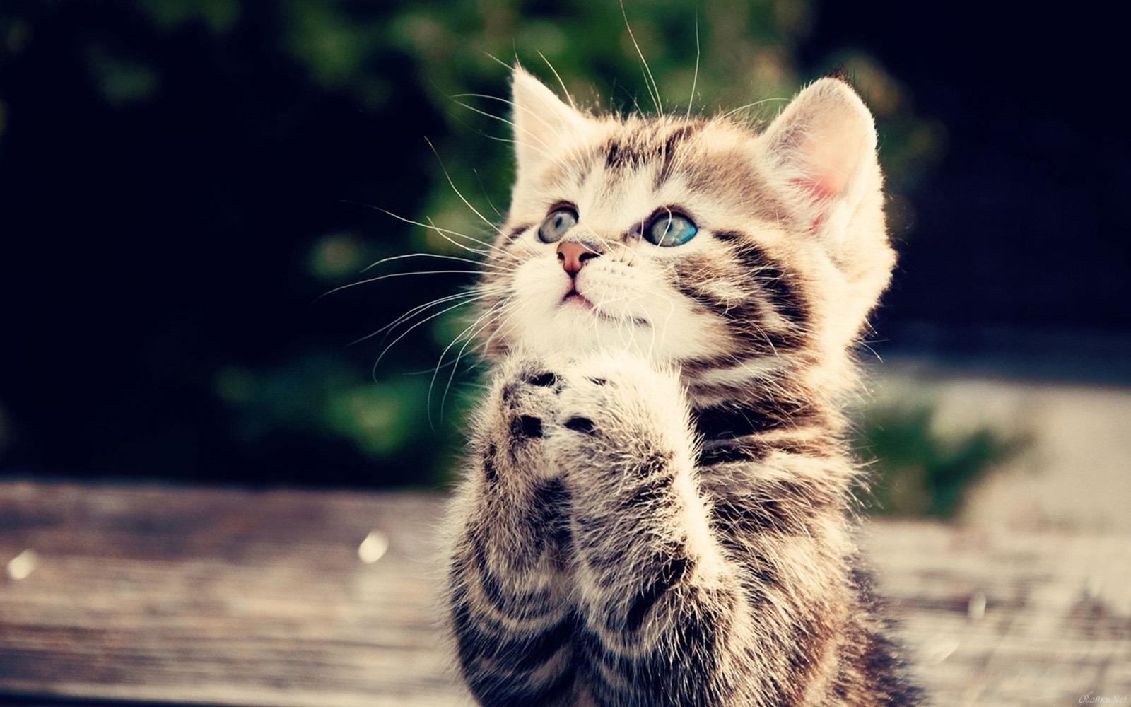 cute-cat-cats-hd-wallpaper