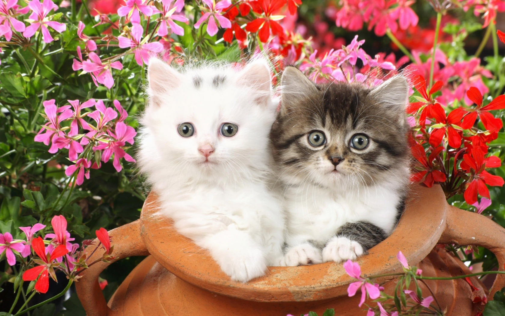 Cute Cats #5 | Cute Cats |Cute Cat Backgrounds