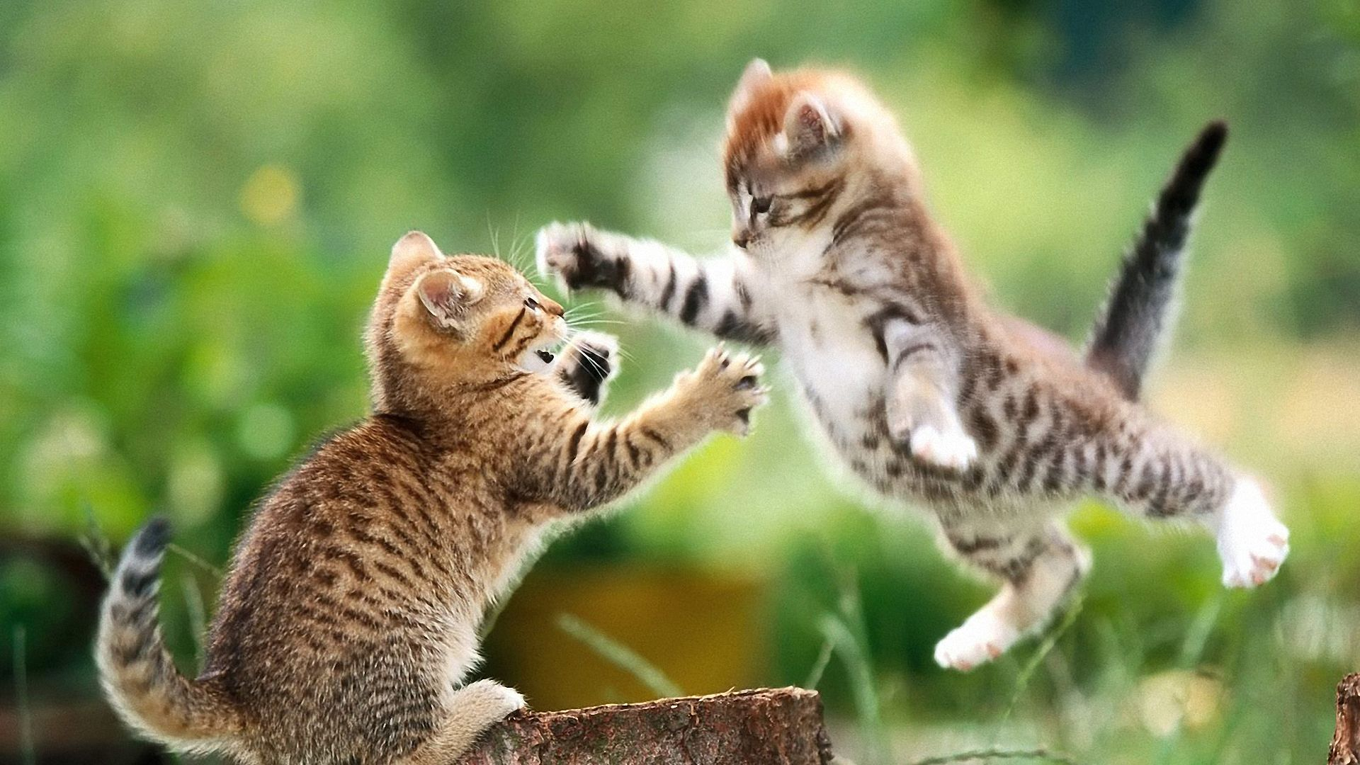 jump cat wallpapers