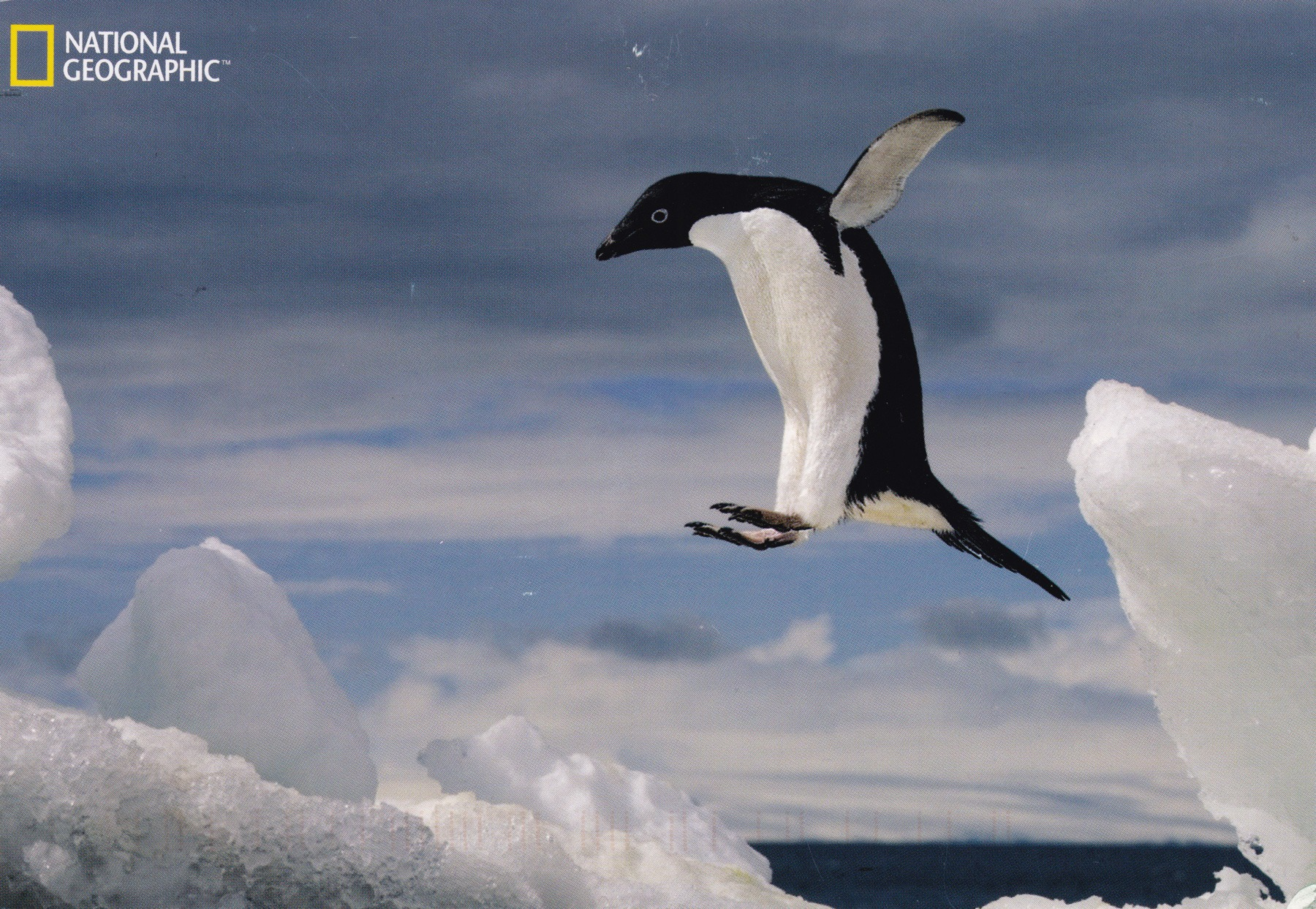 jumping_penguin