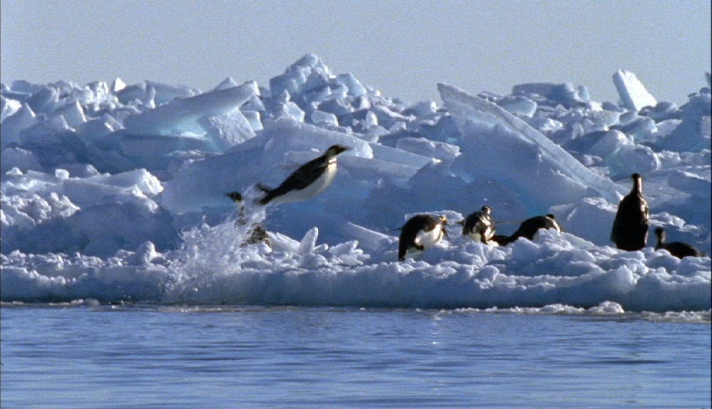 penguins leaping