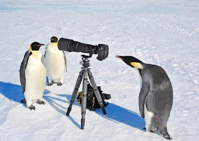 photography penguin pictures
