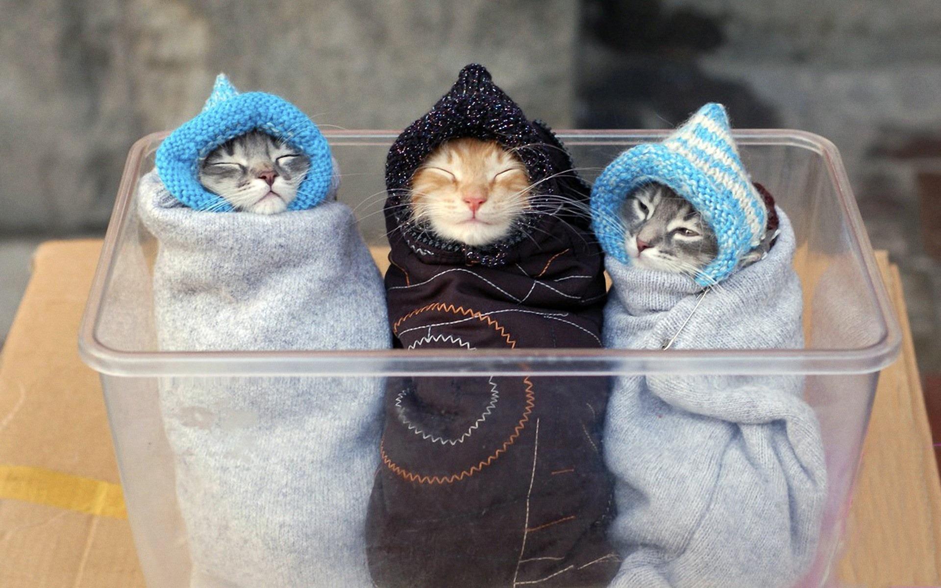 three-cute-cats