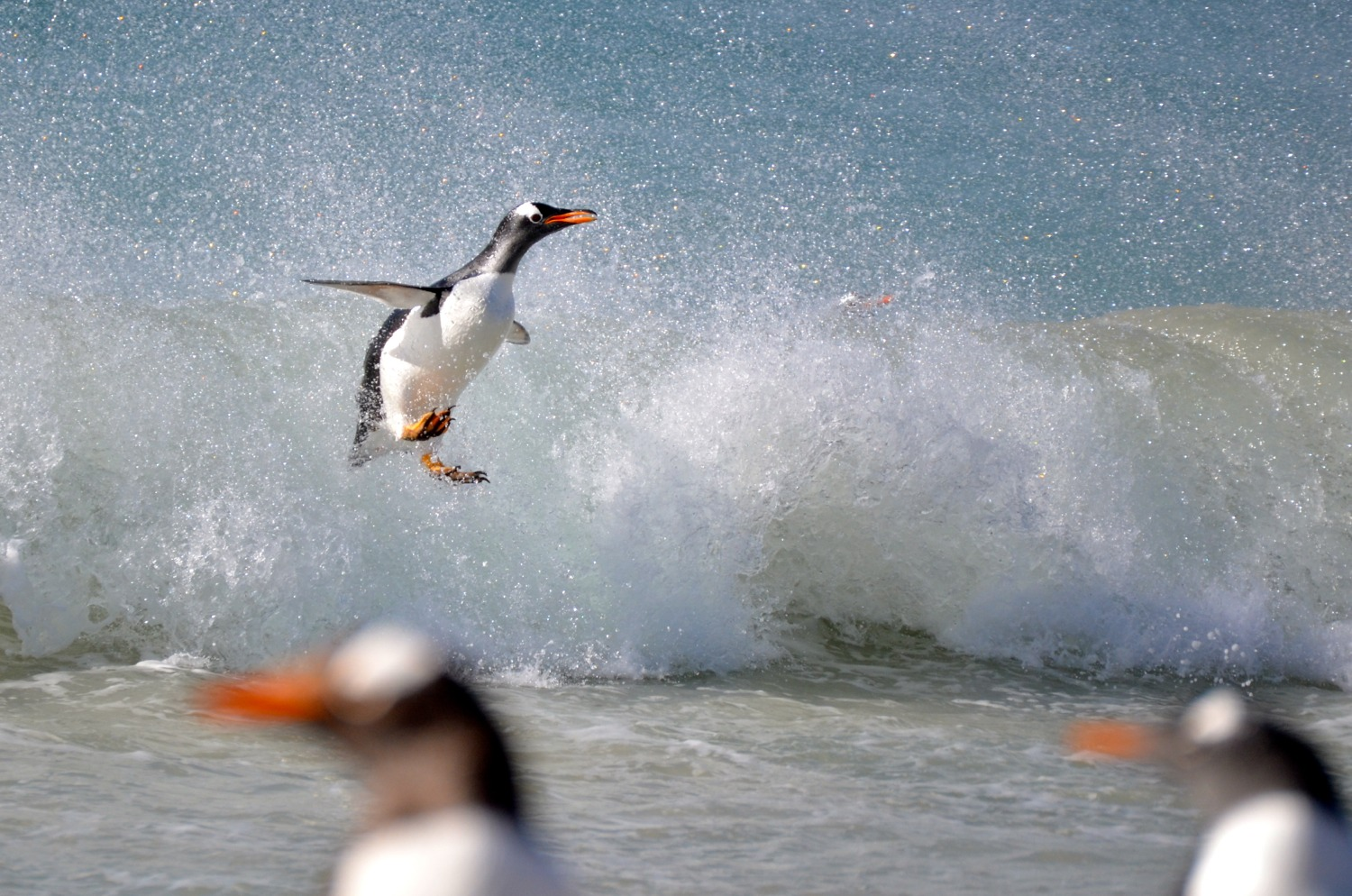 wave penguin