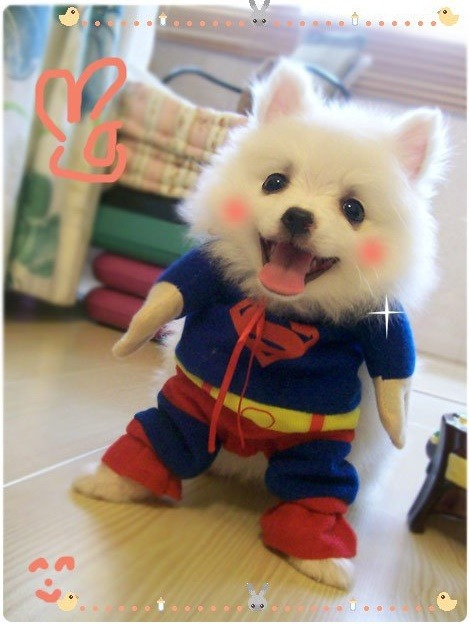 Cute Dog Costume