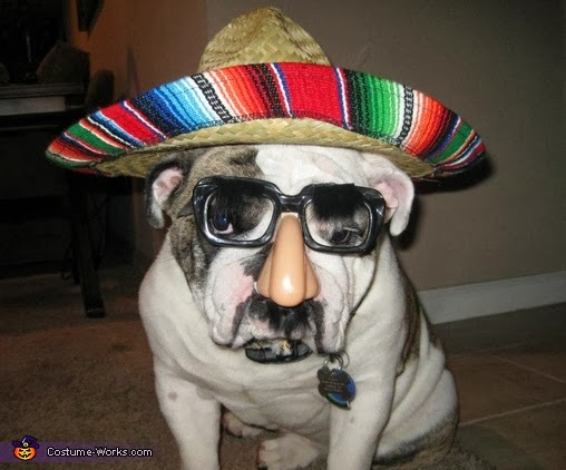 Mexican Dog costume