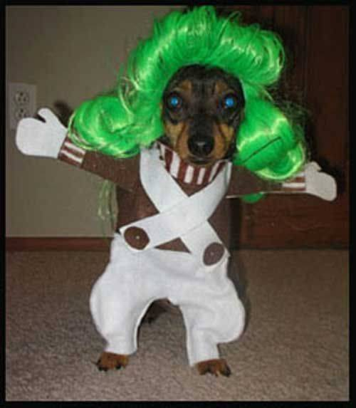 Oompa loompa dog costume