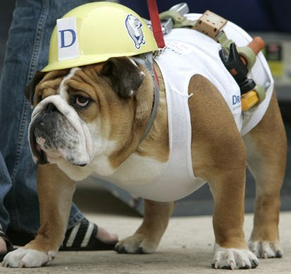 Plumber dogs halloween costumes