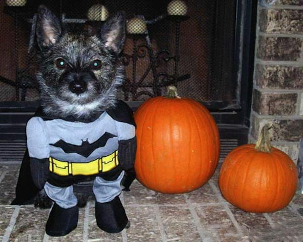 Puppy Batman Halloween Costume