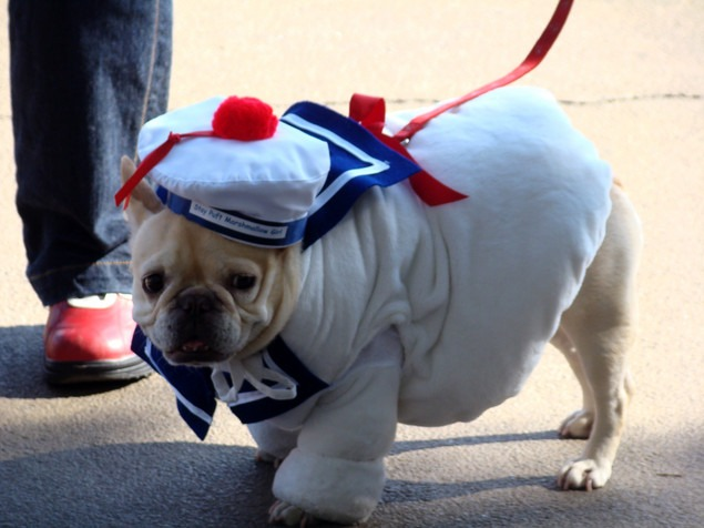 Sailor Dog Costumes