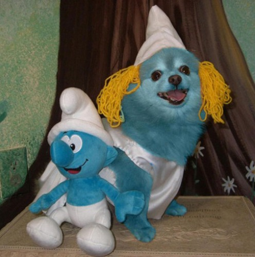 Smurf Dog Costumes