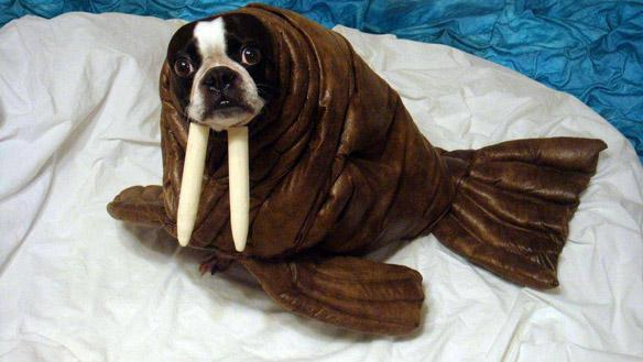 Walrus Halloween Costume