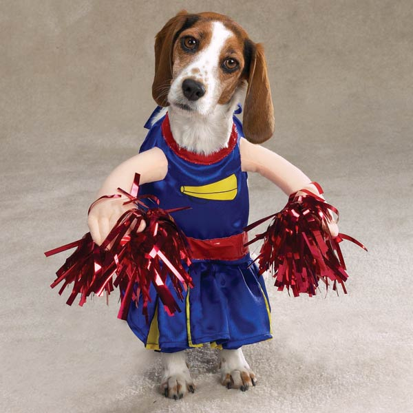 cheerleader halloween dog costumes