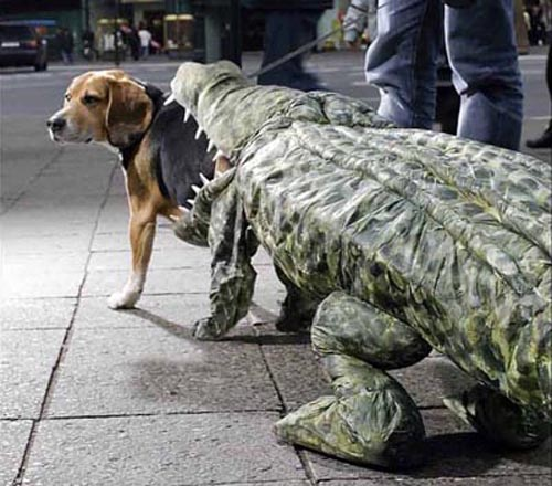 crocodile dog costumes