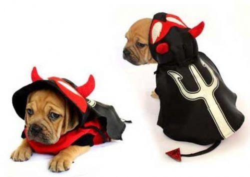 devil dog halloween costumes