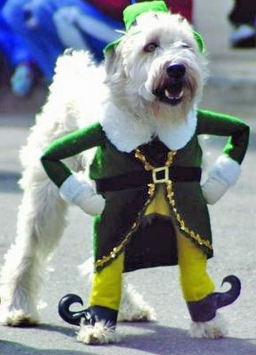 dog costume irish
