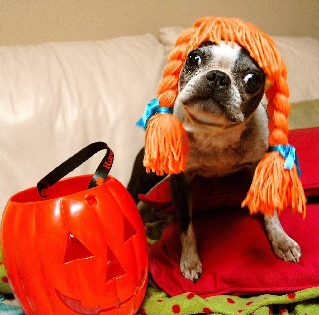 dog halloween costume - Dogs With Halloween Costumes On