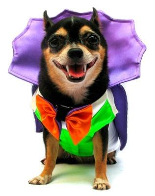 dracula halloween dog costume