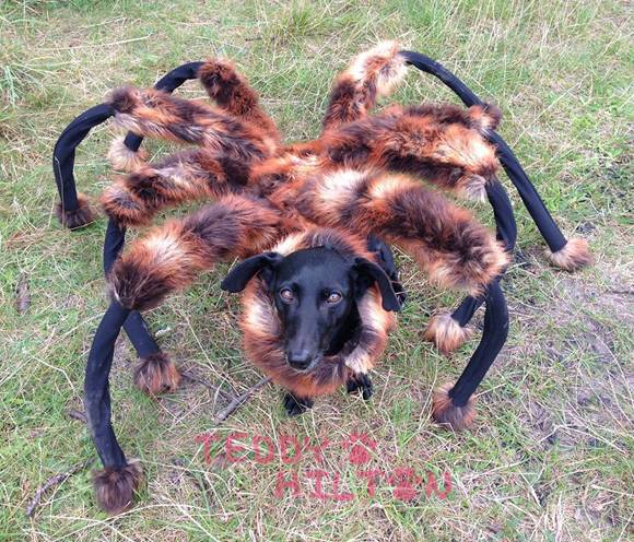 giant spider dog costumes