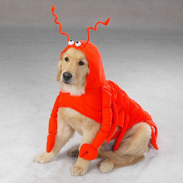 lobster dog halloween costume