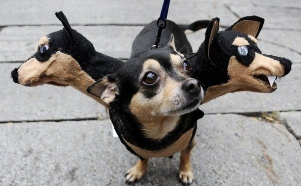 scary dog costumes