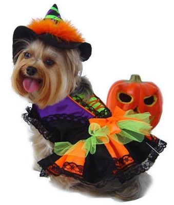 witch halloween dog costume