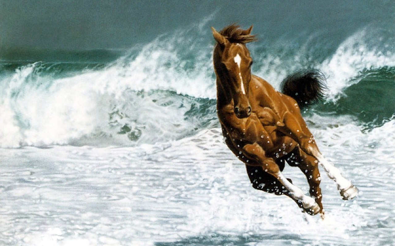 35 Most Beautiful Horse Pictures And Images