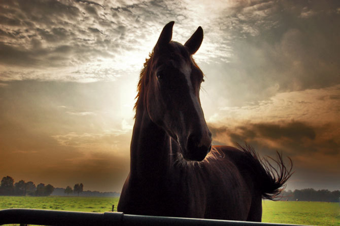 Beautiful-horses