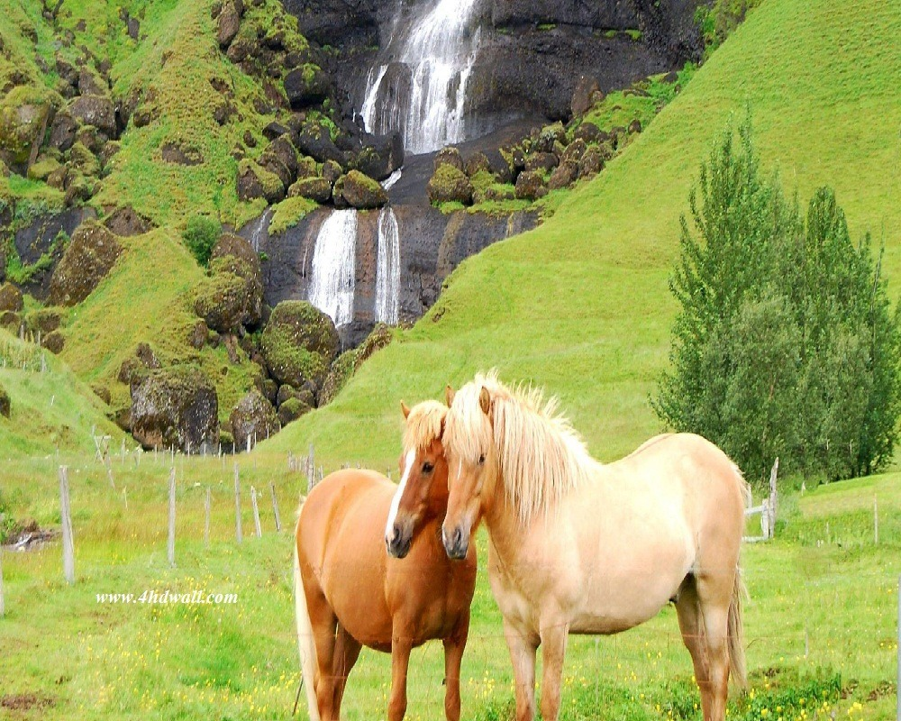 Beautiful-horses_Wallpaper
