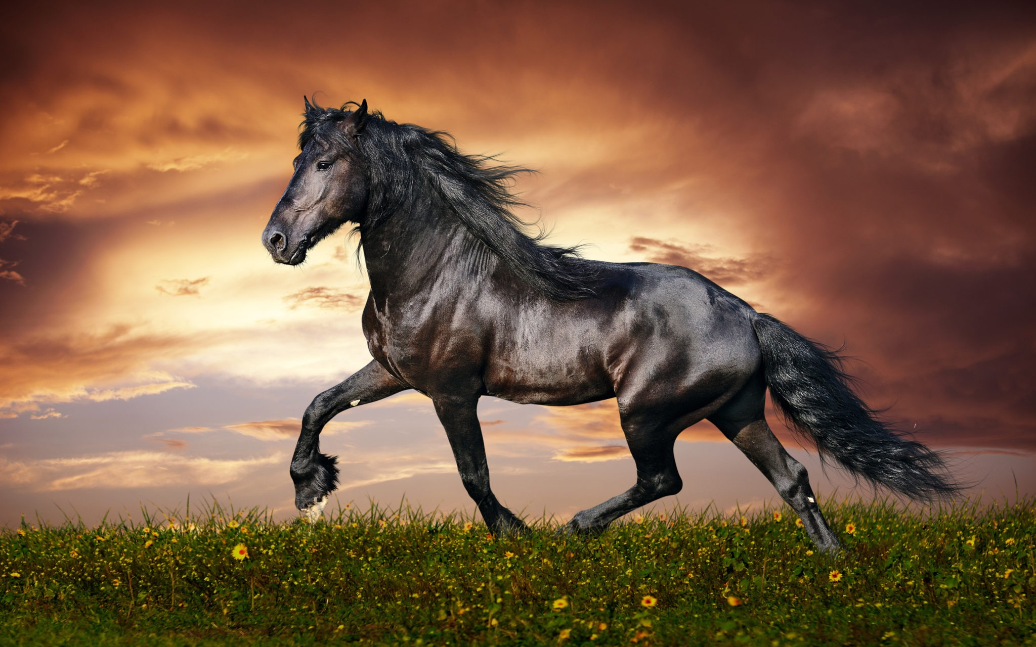 Black-Beautiful-Horse