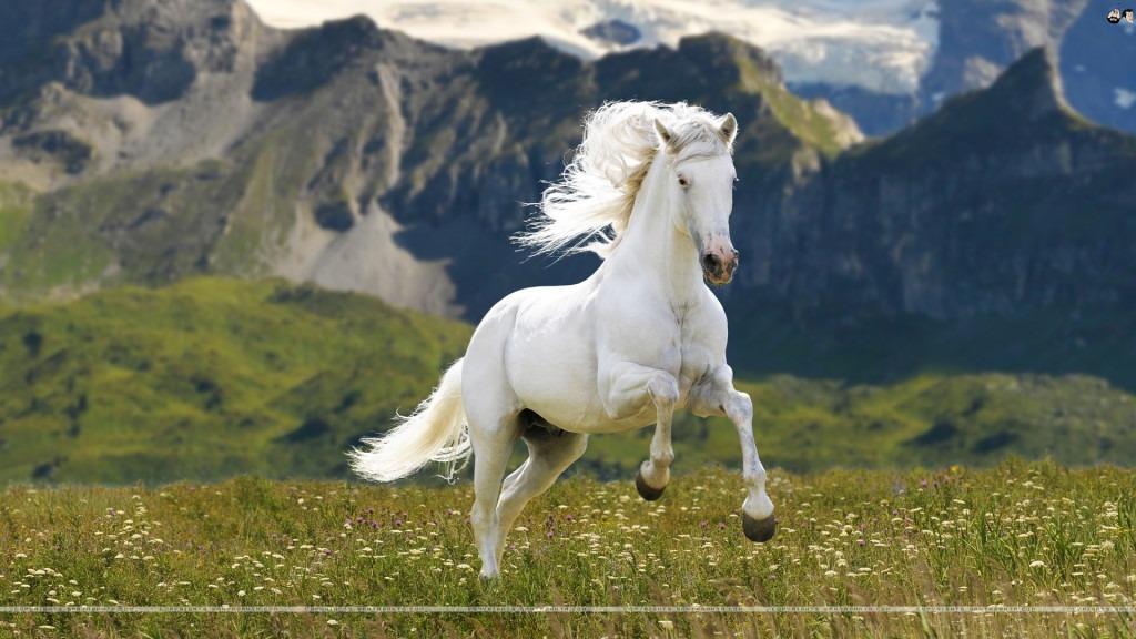 Mountain-horse