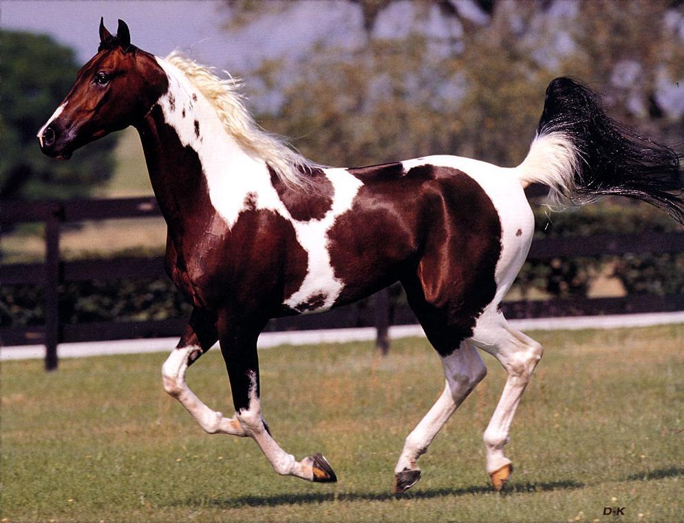 amazing-horse