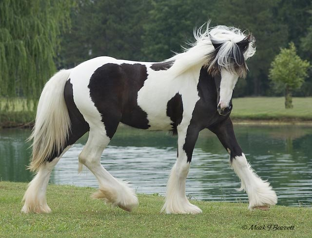 beautiful horses pictures