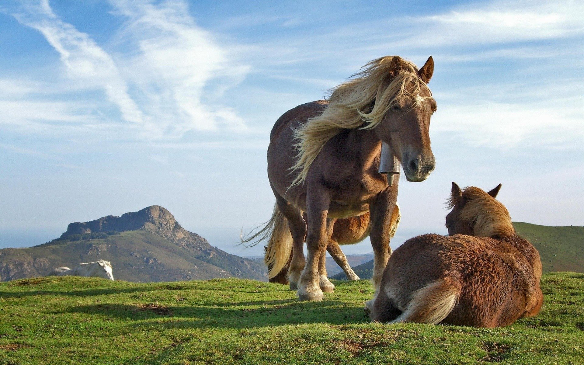 beautiful-horses-wallpapers