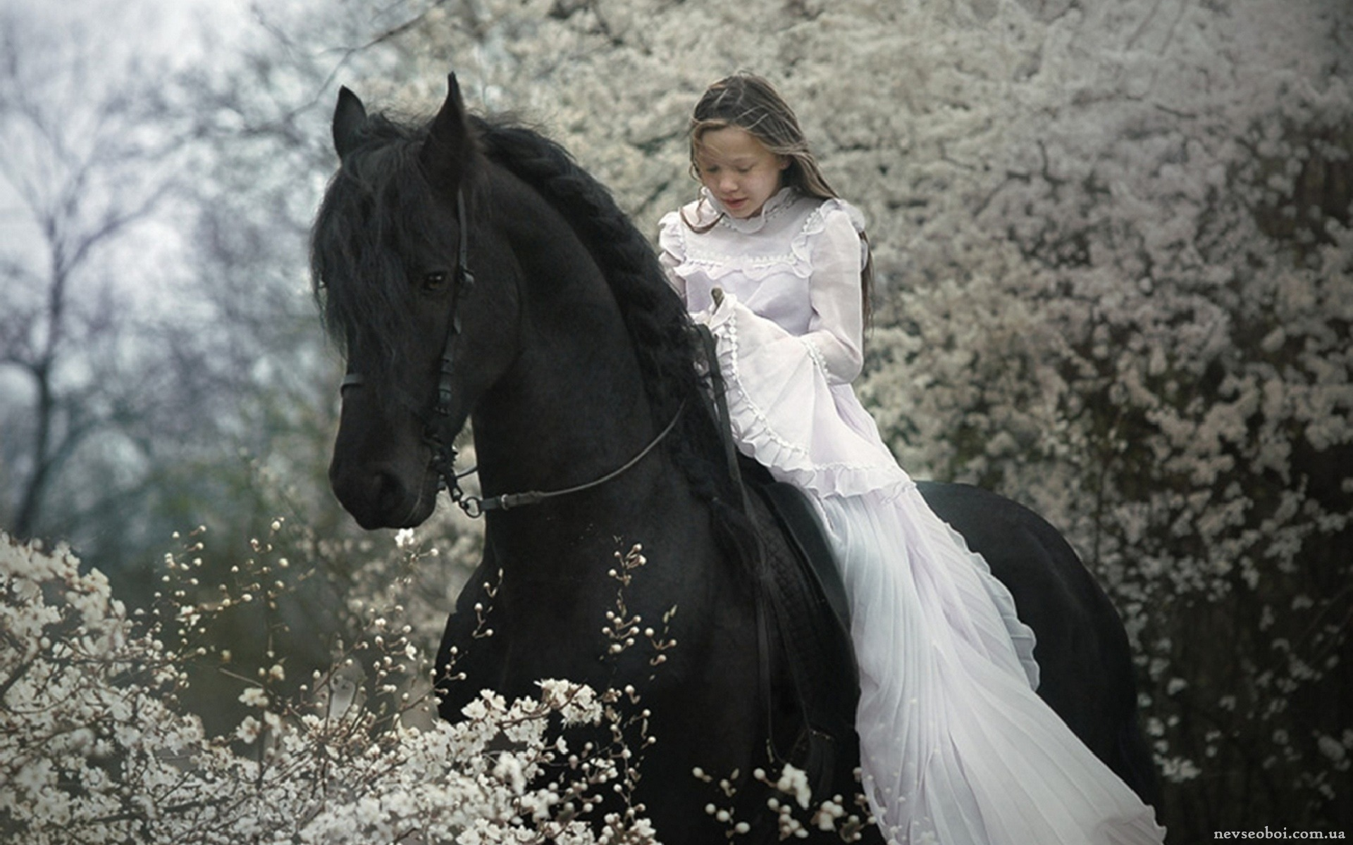 Horse for Wonderful black
