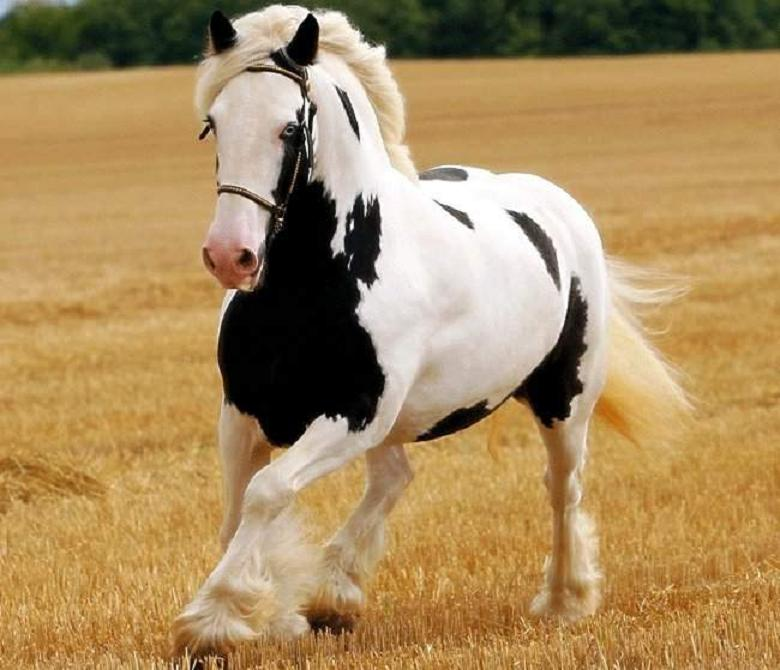 classy-horse