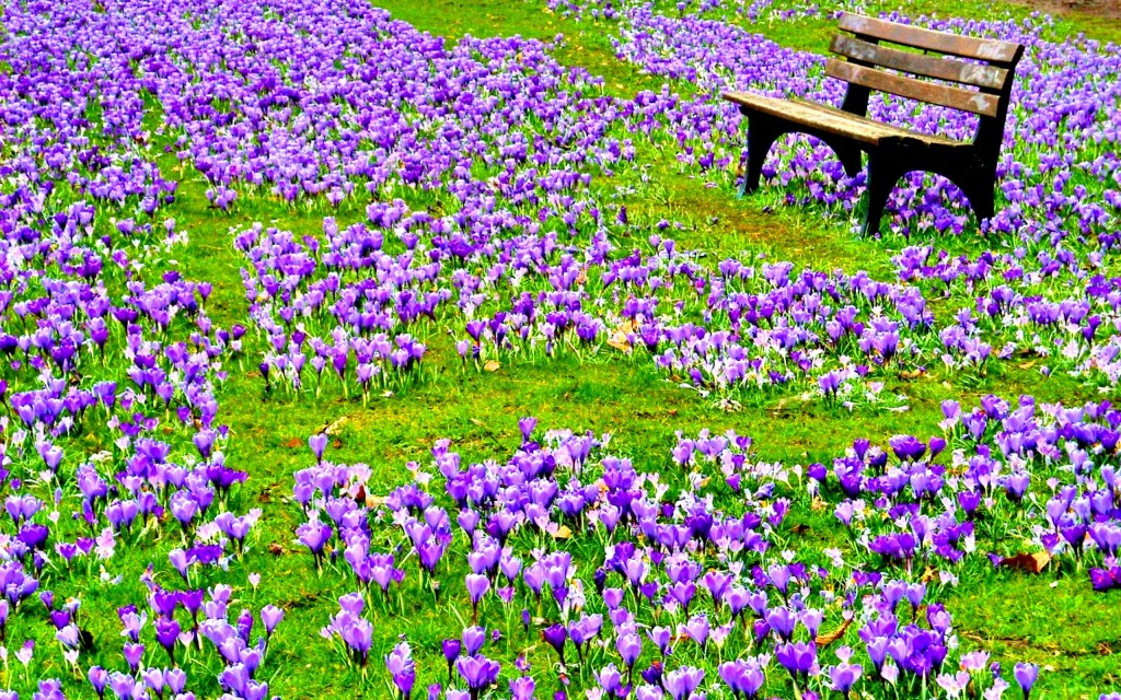 field-of-spring-flowers