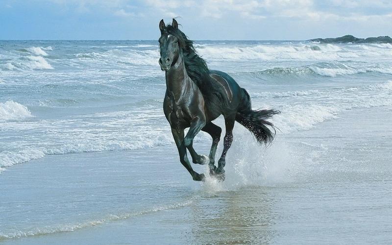 horse-in-sea