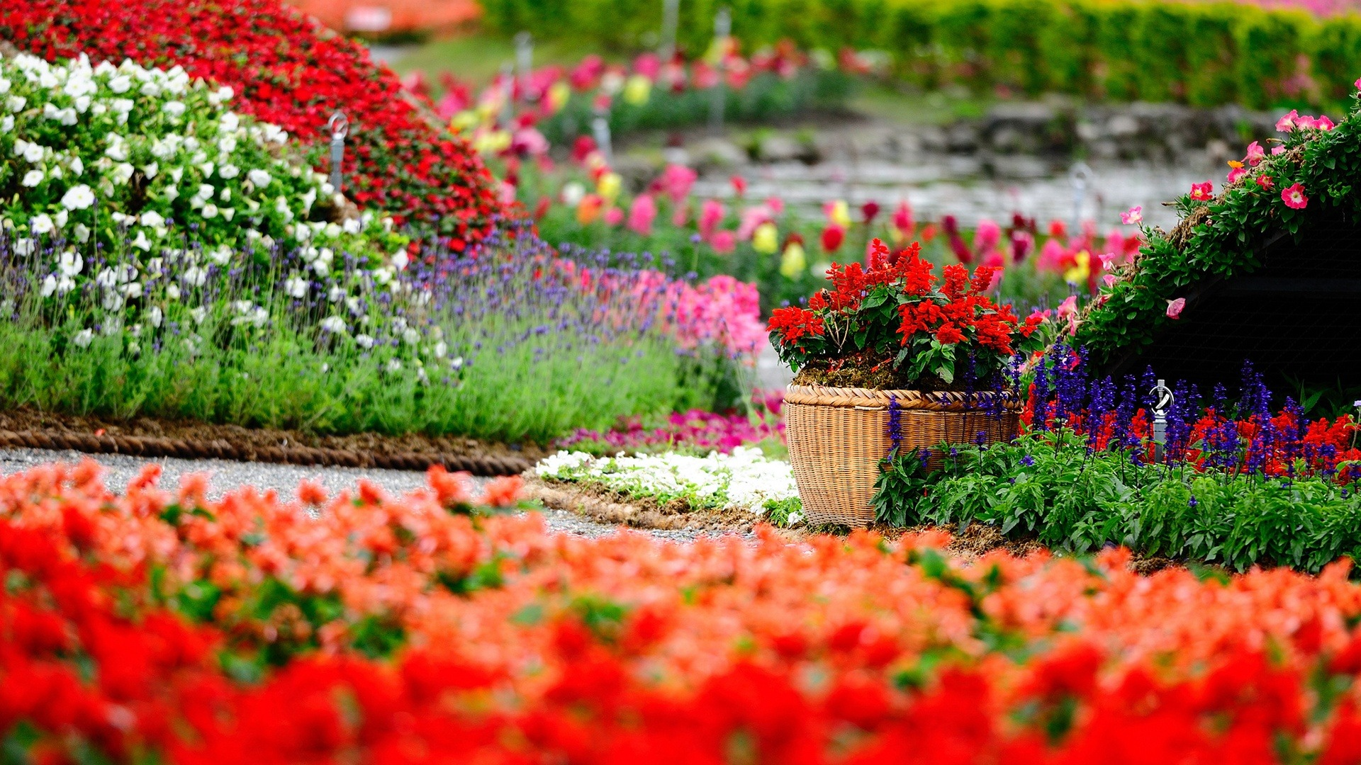 Spring Flowers Park HD Desktop Background
