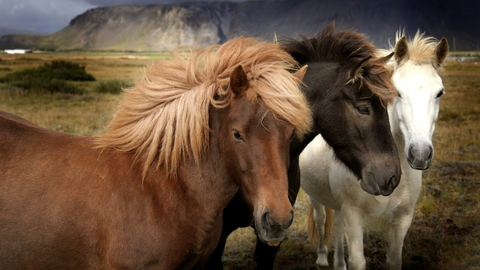 three-beautiful-horses