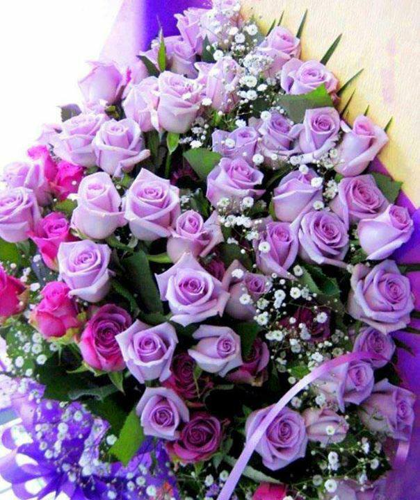 purple roses  - Pictures of flowers