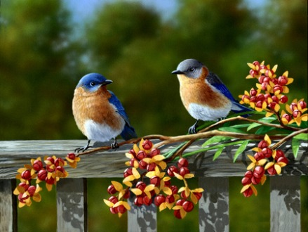 Eastern-Bluebirds