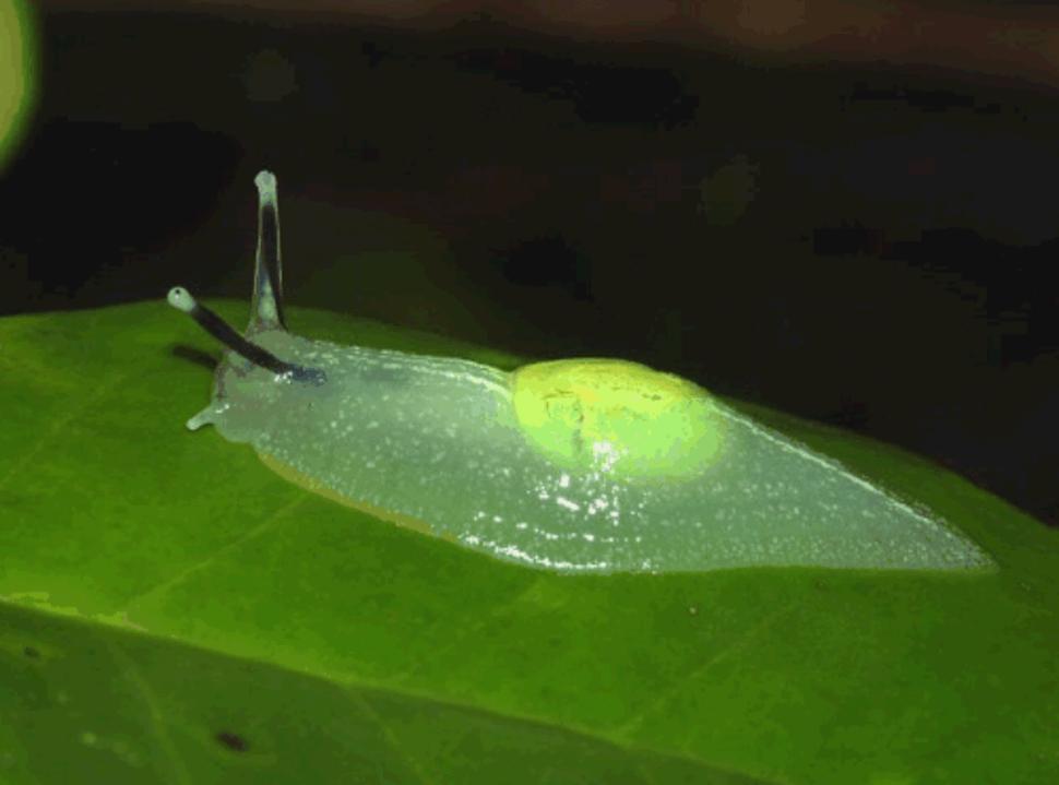 Clear Slug